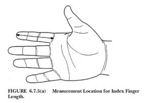 Figure 1: Using a straight ruler, measure the index finger length to the nearest 1 mm (1/16-inch) from the tip of the index finger to the base of the finger as shown here. (Figure/NFPA 1971)