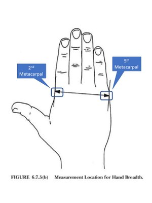 Figure 2: Measure the breadth of the hand to the nearest 1 mm (1/16inch) across the metacarpals (knuckles) on the back of the hand from the second metacarpal to the fifth metacarpal. (Figure/NFPA 1971)
