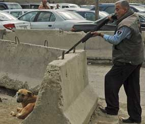 An Iraqi police officer takes aim before shooting a stray dog in the Mansour neighborhood of Baghdad. Obviously, this would not happen in the United States, but sadly, a great many canines are killed each year by officers who simply have not been given the training or understanding they need to avoid disposing of a dog. (AP Photo)