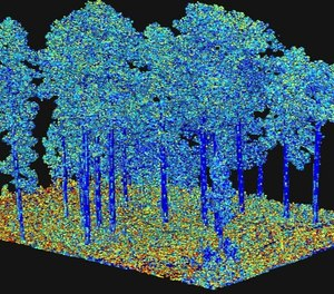 "Output from processing of terrestrial laser scanning data, representing an important fuel characteristic ""surface area"" as illustrated by the different colors. This is input to next-generation fire behavior models. (Photo/ Eric Rowell, Tall Timbers Research Station)"