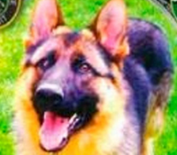 NY cops injured, K-9 killed in crash after vehicle flees DWI checkpoint