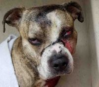 Officer, paramedic rescue dog who was shot in the face, doused in bleach