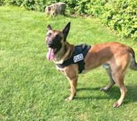 Slain Mass. LEO's K-9 continues to get healthier six weeks after being shot