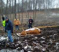 Conn. volunteer firefighters, farmers team up to save cow stuck in mud