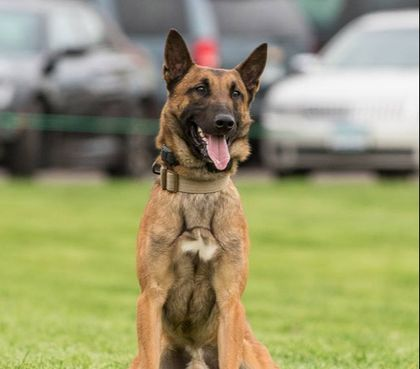 Minn. OIS ends with suspect and K-9 dead, officer wounded