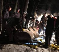 Mich. firefighters rescue horse trapped under ice