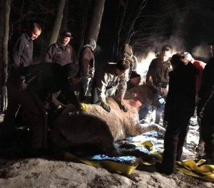 Rescuers found the horse on its side in a creek with one leg trapped under ice; the horse was in hypothermia. (Photo/Oxford Fire Department)