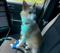 Tenn. fire and EMS crew tend to injured dog after collision