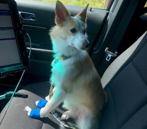 Pepper, the dog, had been in one of the involved vehicles and had bleeding paws from a too-short nail trim at the groomer. (Photo/Rutherford County Fire & Rescue)