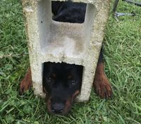 Jaws of Life used to free dog's head from cinder block