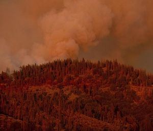 A California forest fire just west of Yosemite National Park was steadily growing Saturday after two more firefighters were injured while battling the flames in blazing summer heat. (Photo/AP)