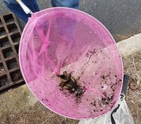 RI firefighters save 9 lives, rescuing ducklings from storm drain