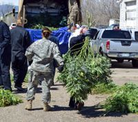 Colo. marijuana market funds busts of illegal growers