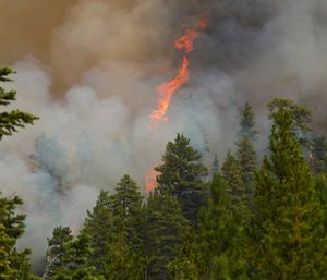 The blaze burned nearly 30 square miles of forest land. (Photo/AP)