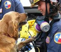Last known 9/11 search dog dies at 16