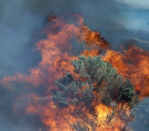 In this Aug. 5, 2015 file photo, fire engulfs sagebrush near Roosevelt, Wash. Federal officials have released a plan intended to reduce the size of giant rangeland wildfires that have become an increasing problem in the Great Basin for cattle ranchers, recreationists and some 350 species of wildlife, including imperiled sage grouse. (AP Photo/Don Ryan, File)(Photo/ AP)