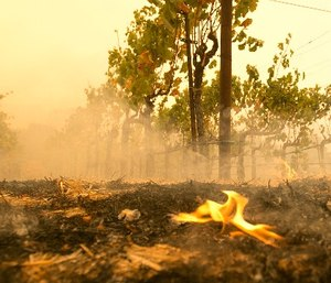 A small flame is all that remains from the flames that burned to the edge of the Robert Sinskey Vineyard, Monday, Oct. 9, 2017, in Napa, Calif. (AP Photo/Rich Pedroncelli)