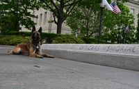P1 Photo of the Week: Honoring the fallen