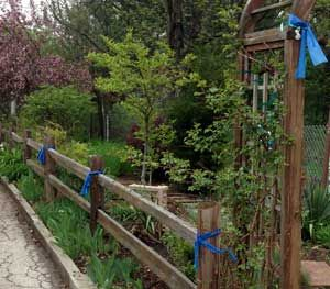 A neighborhood not far from Chicago is adorned with blue ribbons on trees and fence posts as citizens there silently declare their support for law enforcement. (PoliceOne Image)