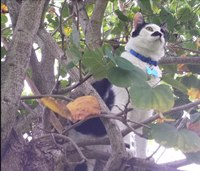 An open letter to the people who call about their cat in a tree