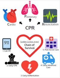 Bystander CPR: A key link in the chain of survival