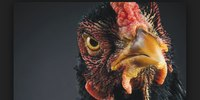 Fire board will lose its game of 'contract chicken'