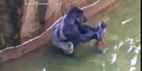 What happened: Firefighters, a gorilla and a toddler