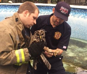 Firefighter James Parker and Engineer Darren Monk with the injured owl. (Photo/Polk County Fire Rescue)