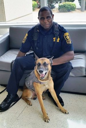 Upon retirement, Deputy Viper will become protector for the family of Deputy Sheriff Michael McRae, his partner and handler. (Photo/DeKalb County Sheriff's Office)