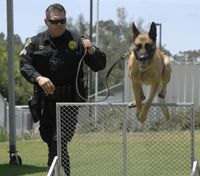 More than man's best friend, meet the Czech Republic-born K-9 that reports for duty