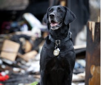 Texas arson dog vies for top K-9 award
