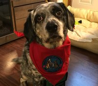 NY EMS agency adopts therapy dog