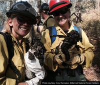 Mont. firefighters rescue mountain lion kittens