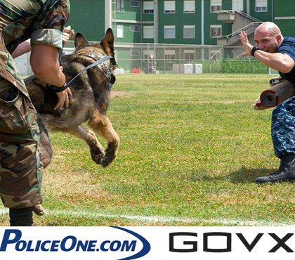 Quiz: What type of K-9 are you?