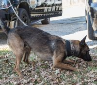 NJ stops training police dogs to sniff out weed