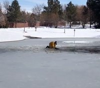 Video: Colo. firefighters rescue dog from icy waters