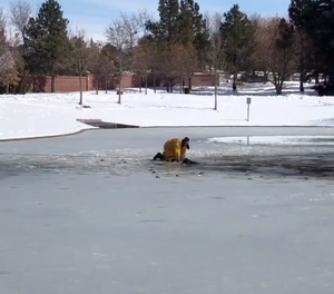 South Metro Fire Rescue Authority firefighters rescued a dog — in seconds, according to the agency — that had fallen into icy water. (Photo/Twitter)