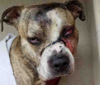 Paramedic, officer rescue dog who was shot in the face, doused in bleach