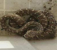 Phoenix firefighters battle house fire while saving hundreds of reptiles