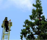 Fire truck deployed to coax man from treetop