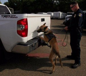 Police Officer Kevin Murray works with police dog, Thor, as the dog searches a Toyota Tundra at the impound lot in Ukiah, CA May 14, 2014. (Photo/Francine Orr/Los Angeles Times/TNS)