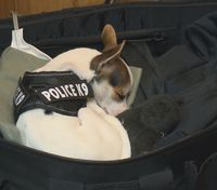 Ohio PD adopts tiny rescue dog