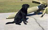 ATF K-9 dies after toxic substance exposure