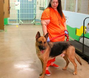 In this photo, Maricopa County Sheriff's Office (MCSO) Animal Safe Haven Unit (MASH) facility is shown. (Rick Scuteri/AP Images for PetSmart Charities)