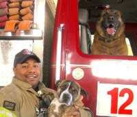 New calendar pairs Tenn. firefighters with their pets