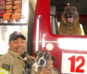 Firefighter David Ruffin of Station 12 poses with Sprout and Taco. (Photo/CFD)