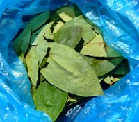 Firefighter blames failed drug test on coca tea