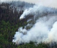 Colo.'s 834 million dead trees threaten to worsen fires