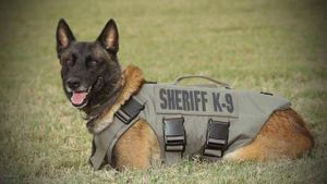 Bexar County K-9, Chucky, who was fatally shot while attempting to restrain a suspect during a pursuit (Photo/ Bexar County Sheriff's Office via Facebook)