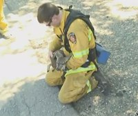 Firefighters rescue baby deer from brush fire